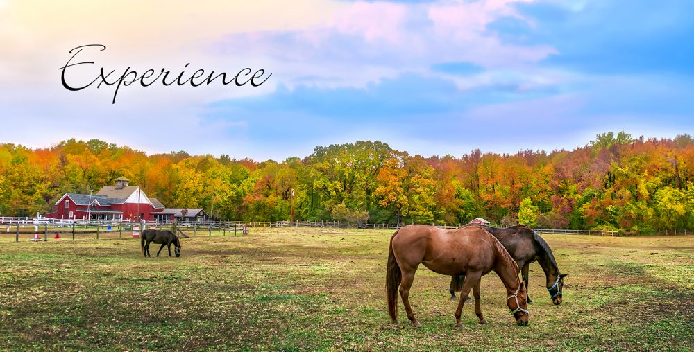 horses at pasture Woodside-Aiken Realty real estate agency Aiken SC