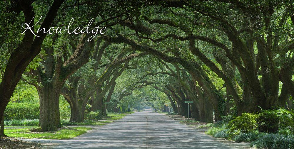 tree lined street Woodside-Aiken Realty real estate agency Aiken SC